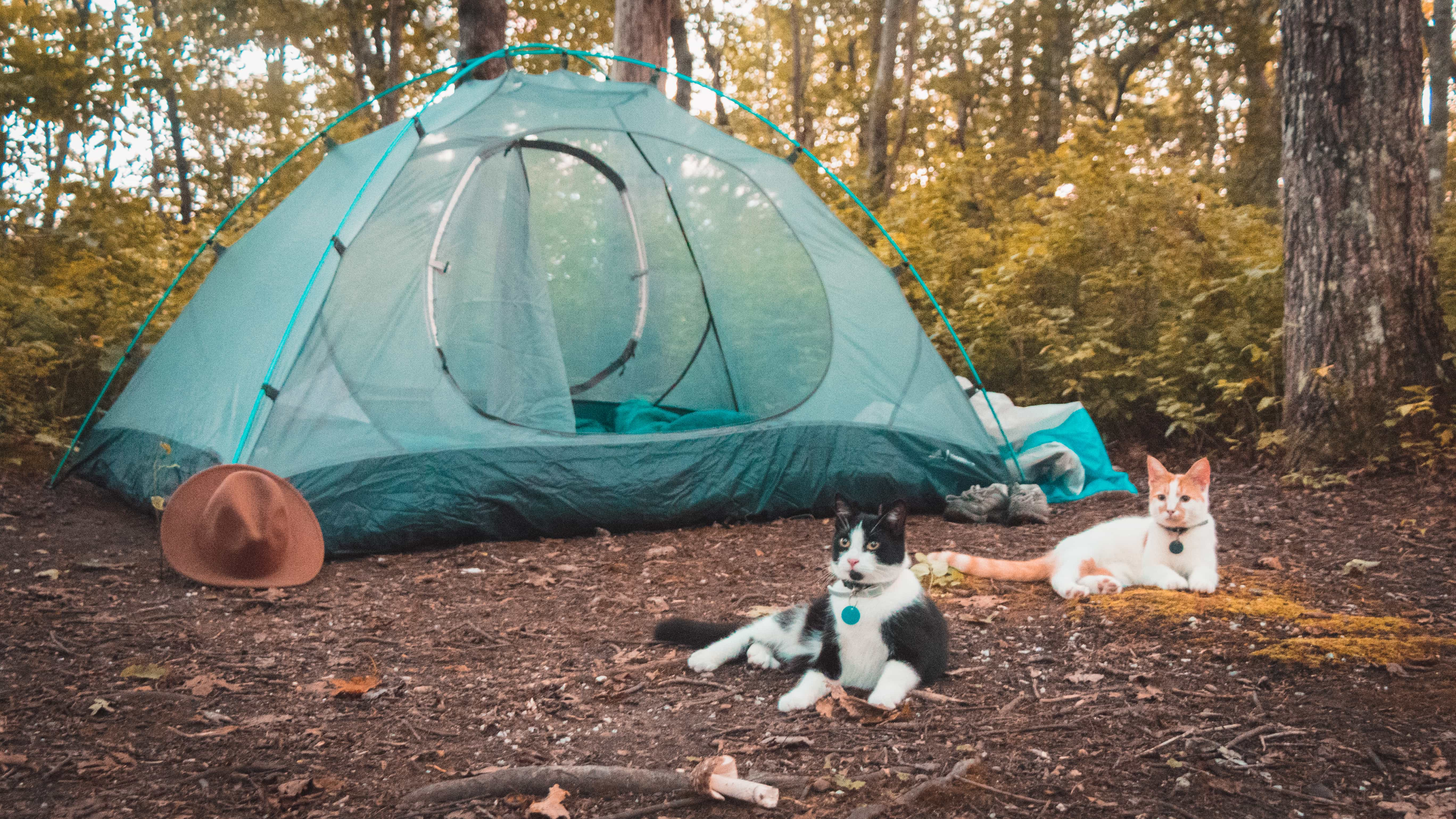 Shalee Blackmer - Camping With Cats
